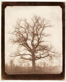 "William Henry Fox Talbot's ""Oak Tree in Winter'' (early 1940s), a salt type from a calotype negative."